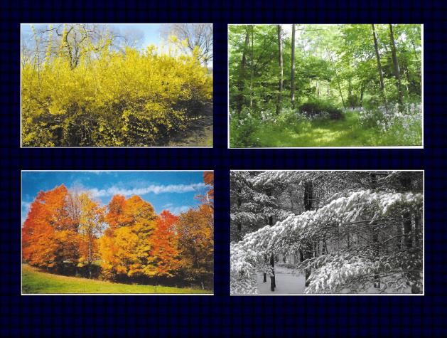 photo cards DER.png