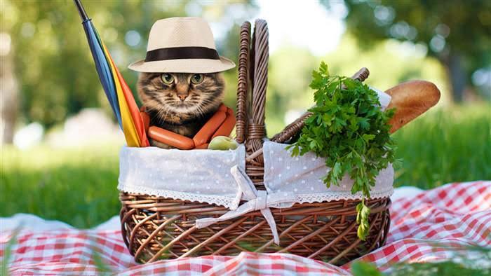 cat-picnic